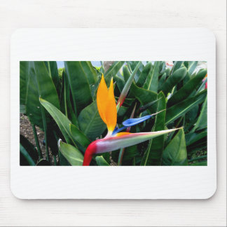 Bird Of Paradise Flower - California Mousepads