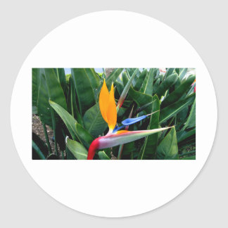 Bird Of Paradise Flower - California Sticker
