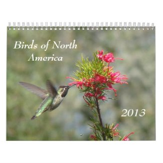 Birds of North America Wall Calendar