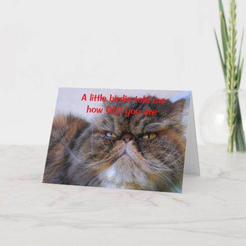 Birthday Humor Calico Persian Kitty Card card