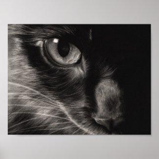 Black Kitten Photo Poster