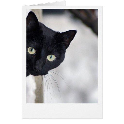 Black Cat Greeting Card Zazzle