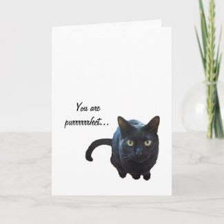Black Cat Purrrfect Valentines Card