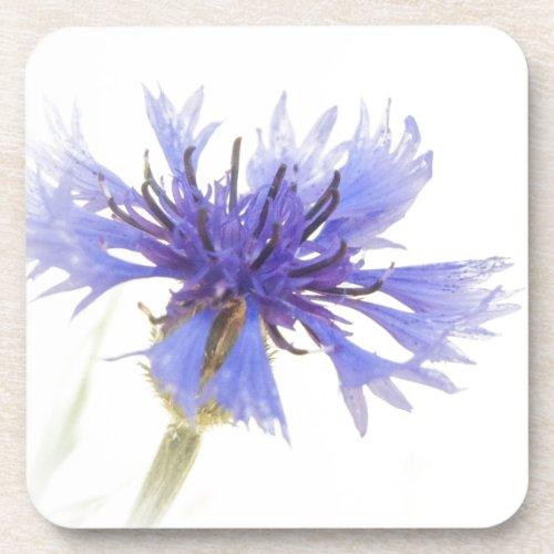 Blue Cornflower Photo - Beverage Coaster