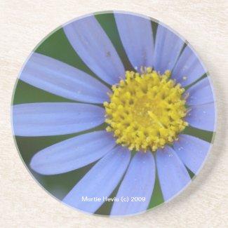 Blue Daisy - Coaster coaster