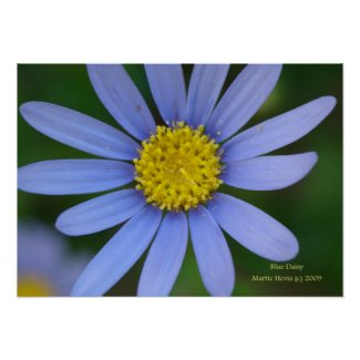 Blue Daisy Print - Select Your Frame print