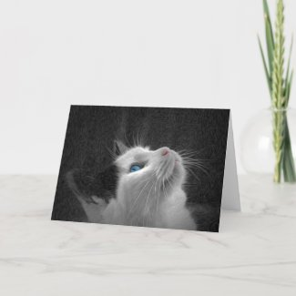 Blue Eyed Cat Photo Card