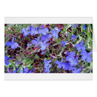 Blue Flower in California Card