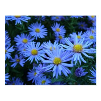 Blue Flowers Postcards