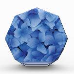 Blue Hydrangea Blossoms awards