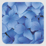 Blue Hydrangea Blossoms stickers