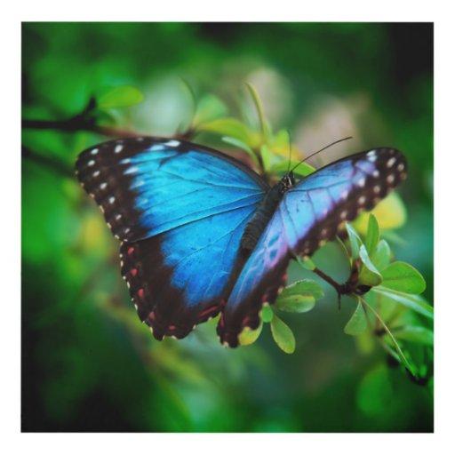 Blue Morpho Butterfly Panel Wall Art Zazzle