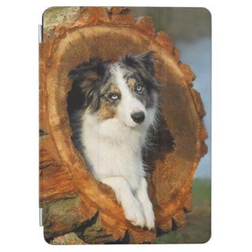Border Collie Blue Merle Dog Cute Portrait Photo - iPad Air Cover