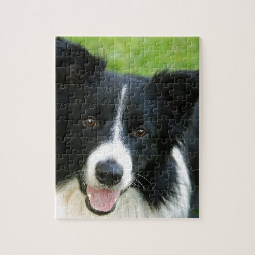 Border Collie Dog Add Text Pet Jigsaw Puzzle