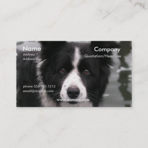 Border Collie Dog Business Card