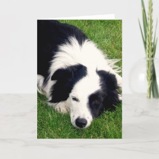 Border Collie - Dog card card