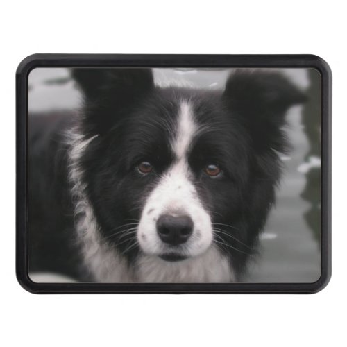 Border Collie Dog Tow Hitch Cover