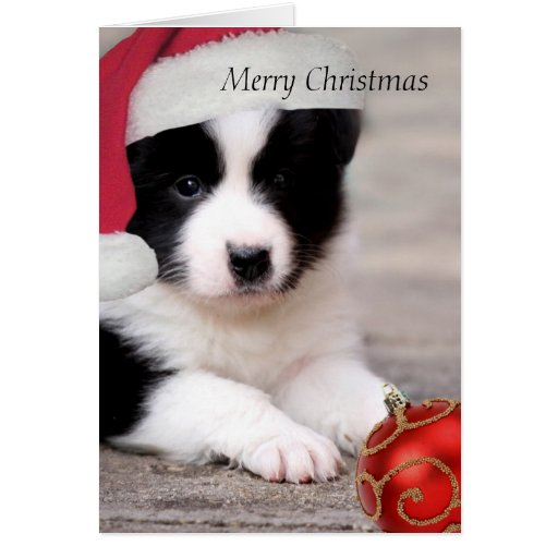 Border Collie Merry Christmas Card Zazzle