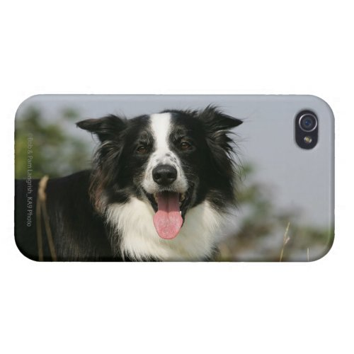 Border Collie Panting Headshot 1 iPhone 4/4S Cover