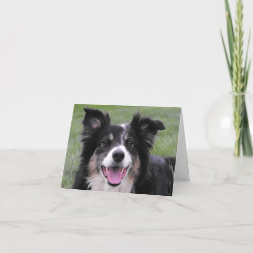 Border Collie Portrait Thank You Card
