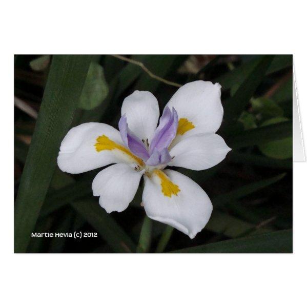 Butterfly Iris Card