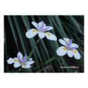 Butterfly Iris Trio Poster