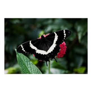Butterfly Lolipop Print print