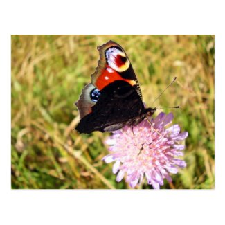Butterfly Post Cards