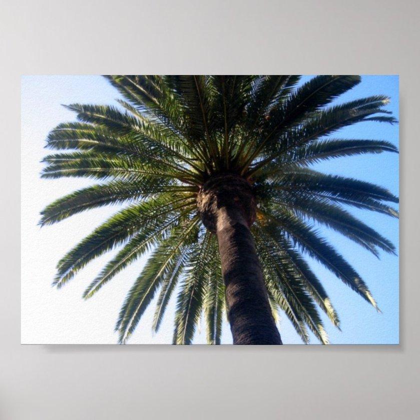 California Beach Palm Tree Custom Poster Art Print
