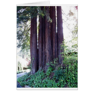 California Red....woods Greeting Card