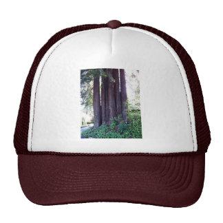 California Red....woods Mesh Hats