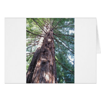 California Redwood Upshot Cards