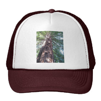 California Redwood Upshot Mesh Hat