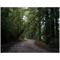 California Seasons - Redwoods Road - Postcard zazzle_postcard