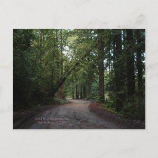 California Seasons - Redwoods Road - Postcard postcard