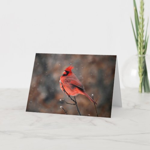 Cardinal in a Snowstorm Note Card card