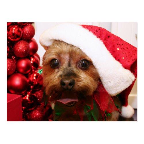 Cassie - Yorkshire Terrier - Scharr Postcard