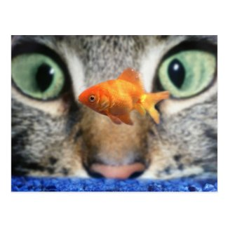 Cat Eyeing Up A Goldfish