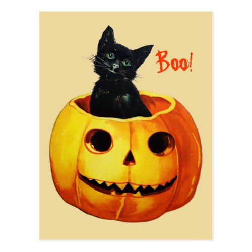 Cat in Pumpkin Vintage Halloween Postcard