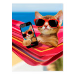Cat lying in hammock with sunglass postcard