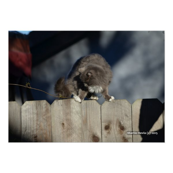 Cat on Fence (11) Poster