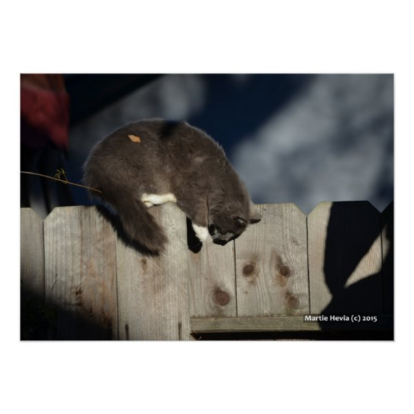 Cat on Fence (4) Poster