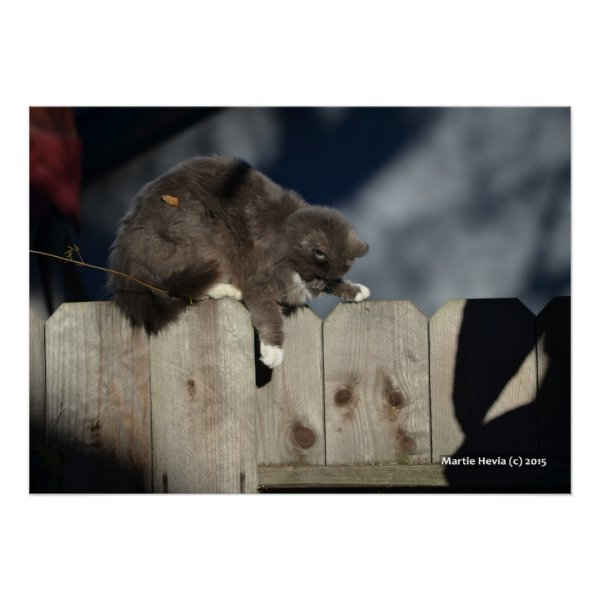 Cat on Fence (9) Poster