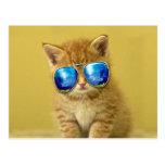 Cat sunglasses - cat love - pet - cute cats postcard