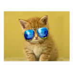 Cat sunglasses - cat love - pet - cute cats postcard