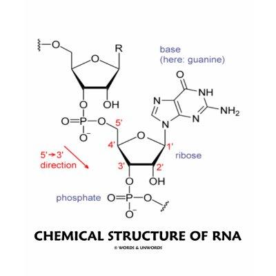 Rna Molecular Structure