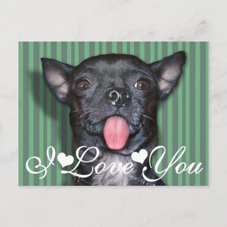 Chihuahua Dog Tongue I Love You Postcard