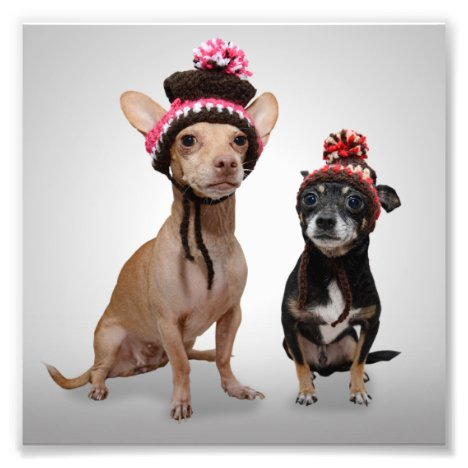 Chihuahua Dogs With Hats Photo
