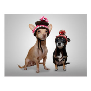 Chihuahua Dogs With Hats Photo Postcard