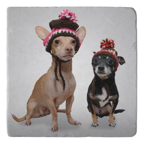 Chihuahua Dogs With Hats Photo Trivet